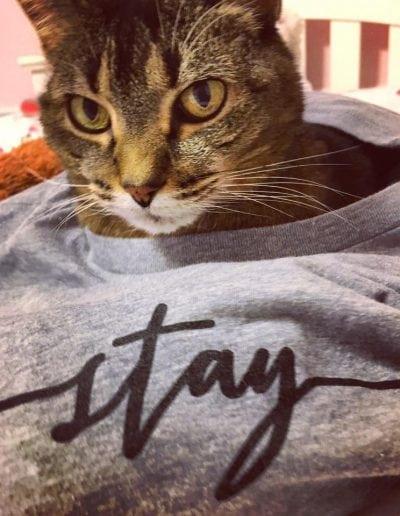 shye louis cat